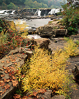 Fall color below Sandstone Falls; New River Gorge National River, WV