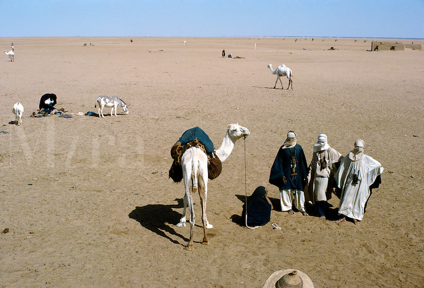 Tuareg (Touareg) men with camel in Sahara desert, In Abangarit, Niger Republic, Africa.