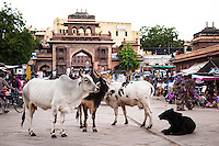 Jodhpur's main shopping area is Nai Sadak, with countless sari and textile shops - leading into Sardar Market, a colorful market with a riot of sights, sounds and smells.  The clocktower is an orientation point to the Sardar Market Area.