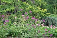 Flowers in Japanese Garden
