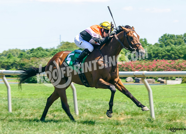 Osceola Pond winning at Delaware Park on 8/15/16