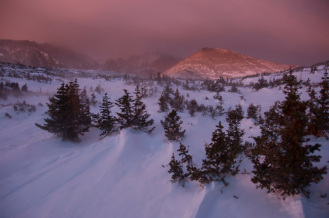 Colorful sunrise on Mt Meeker, Longs Peak and Mount Lady Washington, at krummholz near treeline, winter, Rocky Mountain National Park; blowing snow, February 2008, Colorado, USA, Rocky Mountains.
