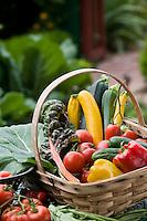Bountiful harvest basket of organic vegetables in Rosalind Creasy small space garden