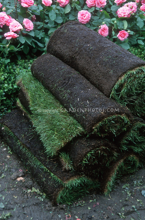 Sod grass ready to install in lawn, lawn renovation, remaking lawn