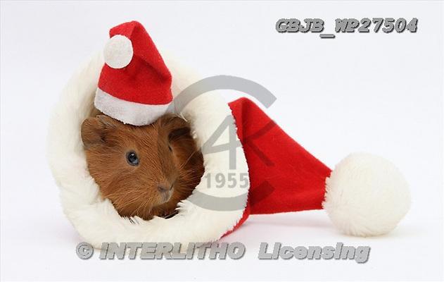Kim, CHRISTMAS ANIMALS, photos, GBJBWP27504,#xa# stickers