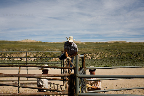 Contractors begin the construction of a trap that will be used to capture wild horses from the rangeland.  The trap consists of several hundred yards of staked landscaping material that is used to funnel the horses towards a gated trap.  The steel fenced trap has several holding pens, each of which is used to move the horses progressively closer to the trailers that they are loaded on to....left to right: Steve Mock, Shayne Sampson, Cameron Warner..Contractors from Cattoor Livestock Roundup, a company based out of Nephi, Utah, work with officials from the Bureau of Indian Affairs and the Bureau of Land Management to drive wild horses into a netted chute.  They are penned at the end of the chute and subsequently sexed and sorted.  Young animals are sent for further testing before being put into the adoption circuit; older horses are fertility treated and re-released.  Principles of range management limit the number of animals that a given plot of land can support and, with annual population increases of about 14%, the BLM works to round up excess wild horses...Cattoor Livestock Roundup is: Dave Cattoor (owner), Sue Cattoor (owner's wife), Troy Cattoor (owner's son) Shayne Sampson (ee), Cameron Warner (ee), Dr. Nial Robinson (ee), Mayci and Trae Cline (pilot's children), Dee Cline (pilot)..BIA is: Preston Smith (Range Management Specialist), Terry Meyers (Range Technician)..Wyoming Livestock Agency Brand Inspectors: Angie Leonardi, Harley Big Knife..BLM is: Scott Fleur, Roy (name)