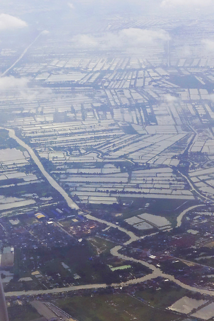 Aerial of rice fields near Bangkok
