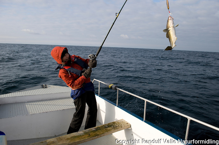 Jente har fått torsk under fiske fra båt. ---- Girl having caught a cod.