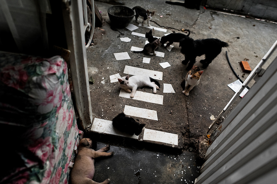Street dogs and cats sleep and eat in a shaman's house in Cali, Colombia, 17 April 2013. Although the original spiritual tradition, kept by the indigenous shamen in Americas for centuries, has been systematically repressed by the Catholic Church, nowadays, more and more people from the urban areas of Latin America discover their roots and consult their everyday problems with esoteric practitioners, healers and shamen. Traditional indigenous rituals (reading of tobacco - interpretation of signs shown by burn tobacco leaves) have merged with European concepts (divination using playing cards) and animistic religious beliefs (worshipping the spirits) brought to Americas by the African slaves, keeping the spirituality in modern Latin American society alive.