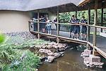 07.01.2019, Lion & Safari Park, Broederstroom, Kalkheuvel, RSA, TL Werder Bremen Johannesburg Tag 05<br /> <br /> im Bild / picture shows <br /> Ilia Gruev (Werder Bremen #28), Jean Manuel Mbom (Werder Bremen #34), Johannes Eggestein (Werder Bremen #24) fotografieren Krokodile mit Handy, <br /> <br /> Teil der Spieler besucht am 5. Tag des Trainingslager eine geführte Tour im Lion & Safari Park, <br /> <br /> Foto © nordphoto / Ewert