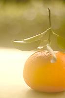 A single orange