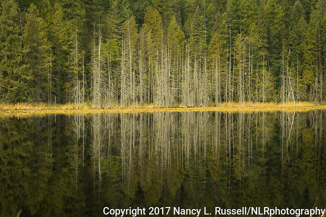 Trees reflecting onto Dawson Lake in the fall