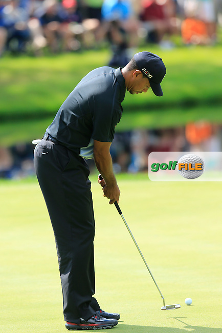 Tiger Woods (USA) putts on the 16th green during Thursday's Round 1 of the 2013 Bridgestone Invitational WGC tournament held at the Firestone Country Club, Akron, Ohio. 1st August 2013.<br /> Picture: Eoin Clarke www.golffile.ie