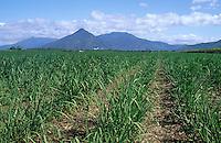 Océanie/Australie/Queensland/Env. de Cairns: Champs de canne à sucre
