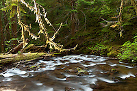 A wilderness river flows through the rainforest of Gifford Pinchot NF, Washington