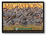 With 16 blank notecards - 4 each of 4 images with envelopes - this card set is an ideal gift. Images included are: Zebras, Leaping Impalas, African Elephants and Pacific Double-Saddled Butterflyfish.<br />