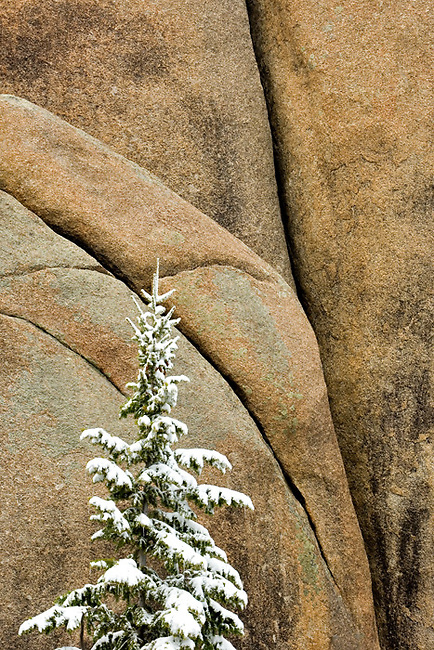 snow, evergreen tree, Lumpy Ridge, rock, Rocky Mountain National Park, Colorado