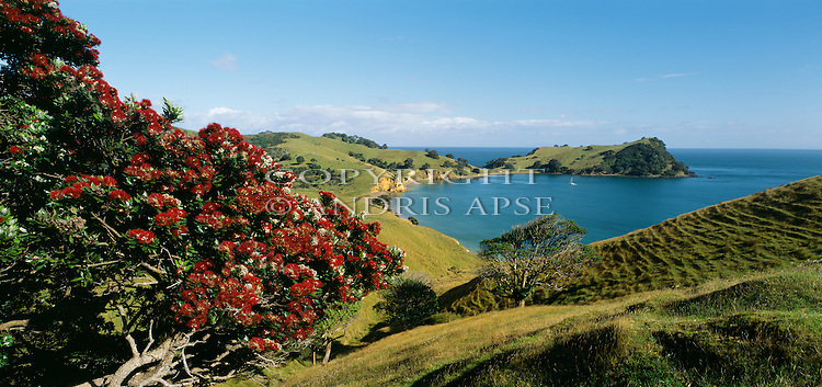 Hooks Bay. Waiheki Island. Auckland Region. New Zealand.