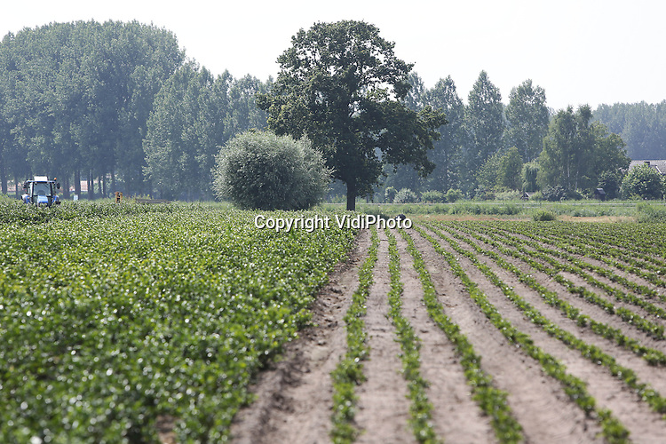 Foto: VidiPhoto<br /> <br /> SINT OEDENRODE - Het landschap rond de Dommel bij Sint Oedenrode.