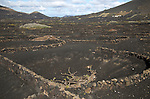 Grapevines growing in black volcanic pits in La Geria, Lanzarote, Canary Islands, Spain