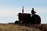 Antique tractors plowing a field in fall during the Branch 158 EDGE & TA Fall Plow Day and Plowing Seminar near Pleasant Grove, Calif...Silmer Scheidel Farm..Minneapolis-Moline tractor silhouette