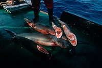 Finned Sharks on deck of long line fishing boat. Cocos Island, Costa Rica - Pacific Ocean
