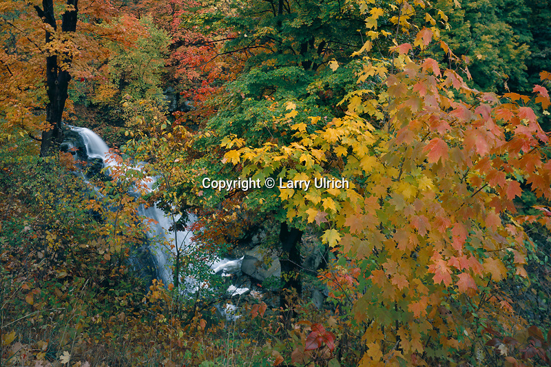 Red maples and Brandywine Falls <br /> Brandywine Creek<br /> Cuyahoga Valley National Park<br /> Summit County, Ohio