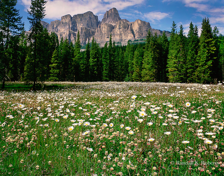 Wildflowers and Castle Cliffs, Banff National Park, Alberta, Canada