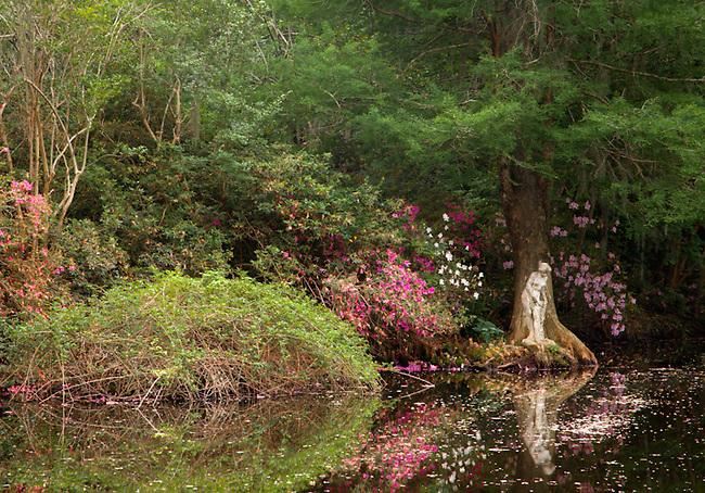 Magnolia gardens, South Carolina,  Charleston,South Carolina