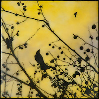 Alone yet together - silhouette photo transfer of bird in branch with berries in encaustic painting of yellow sky.