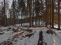 FOREST_LOCATION_90152
