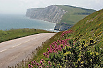 The Military Road, looking towards Freshwater Bay, Isle of Wight, With Tennyson Down in the background