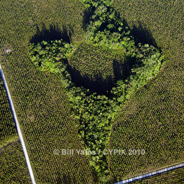 Tree farm and protected wetlands Florida fixed-wing aerial