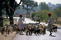 India, Rajasthan, near Udaipur: Rural scene of shepherds and goats on way to market | Indien, Rajasthan, bei Udaipur: zwei Hirten mit Ziegenherde auf dem Weg zum Markt