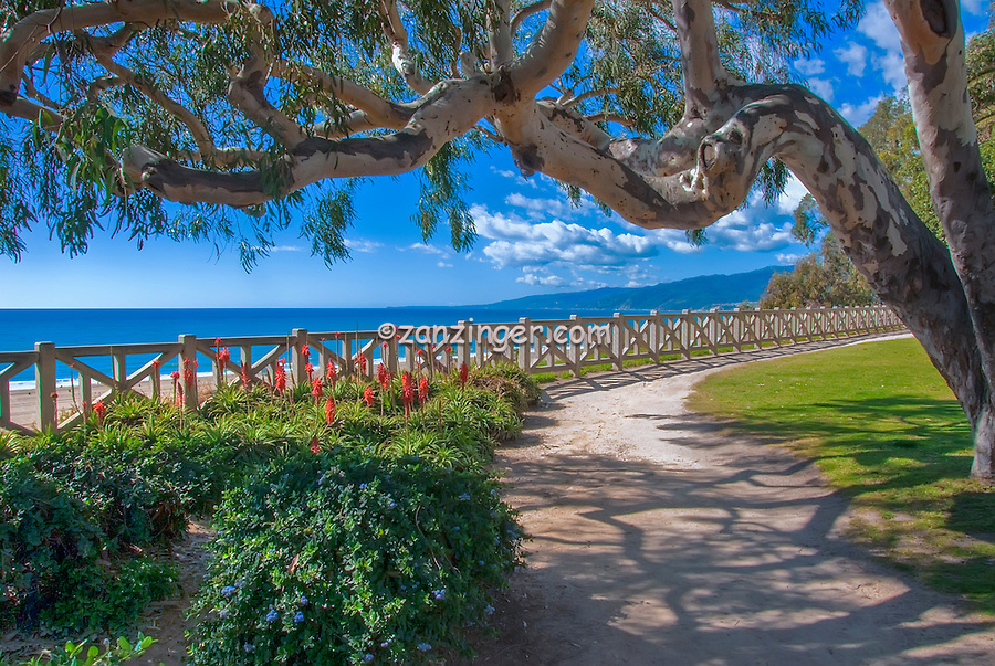Santa Monica; CA; Palisades Park. Ocean Avenue; Bluffs; Los Angeles California; Landscape; Palm Trees