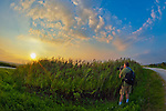 Photographer photographing marshland sunset by marsh reeds at Levy Park and Preserved, in Merrick, Long Island, New York, USA, summer 2011.