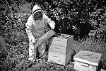 Barbara Felton, a beekeeper tending to the bee hive