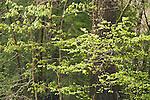 Spring forest detail
