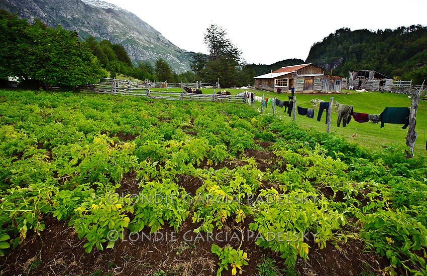 Beni's homestead and organic farm, a  remote area next to the Futaleufu River. Rio Futaleufu, Patagonia, Chile, South America