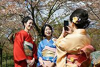 Nederland   Amstelveen   2017 04 08. Cherry Blossom Festival in het Amsterdamse Bos . Het Japanse Sakura (Kersenbloesemfestival) markeert de start van de lente. Volgens traditie vieren families en vrienden dit met een picknick onder de kersenbomen die in bloei staan. De gemeente Amstelveen organiseert dit festival voor de Japanse gemeenschap, als dank voor de schenking van 400 kersenbomen in 2000. (  Aan de linkerkant van de foto is mbv Photoshop een stukje afzetlint verwijderd ).   Berlinda van Dam / Hollandse Hoogte