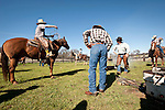 Calf marking and branding at the Stoney Creek Corrals of the Busi Ranch, Amador County, Calif.