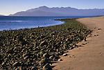 Rocks along the beach at low tide, Bahia de los Angeles, Baja California, Mexico