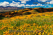 Tom Mackie, LANDSCAPES, LANDSCHAFTEN, PAISAJES, photos,+America, American, California, Lake Elsinore, North America, Tom Mackie, USA, bloom, blooming, blossom, blossoms, california+poppies, cloud, clouds, color, colorful, colour, colourful, floral descriptions, flower, flowers, horizontal, horizontals, na+tural, natural landscape, nature, orange, outdoors, scenery, scenic, super bloom, travel, weather, wildflower, wildflowers,Am+erica, American, California, Lake Elsinore, North America, Tom Mackie, USA, bloom, blooming, blossom, blossoms, california po+,GBTM190048-1,#l#, EVERYDAY