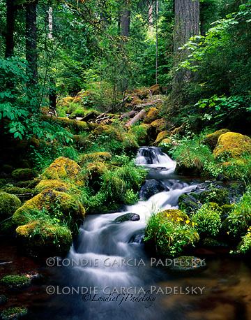 Rain Forest and Watson Creek, Umpqua National Forest, Oregon