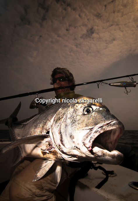 The Giant Trevally (Caranx ignobilis) is a very much sought after gamefish because of its strenght and spectacular strikes, They take top water lure with rage and once hooked sound in search of the nearest coral