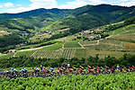 The peloton race through the vineyards of Burgandy during Stage 8 of the 2019 Tour de France running 200km from Macon to Saint-Etienne, France. 13th July 2019.<br /> Picture: ASO/Alex Broadway | Cyclefile<br /> All photos usage must carry mandatory copyright credit (© Cyclefile | ASO/Alex Broadway)