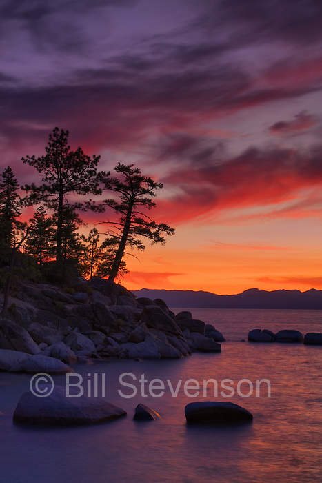 A picture of silhouetted trees and a spectacular sunset at Lake Tahoe. This is a popular location for photographers. Right next to the road on the Nevada side it provides  a photographer with a classic leaning  pine tree.
