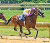 Articulate winning at Delaware Park on 7/6/16