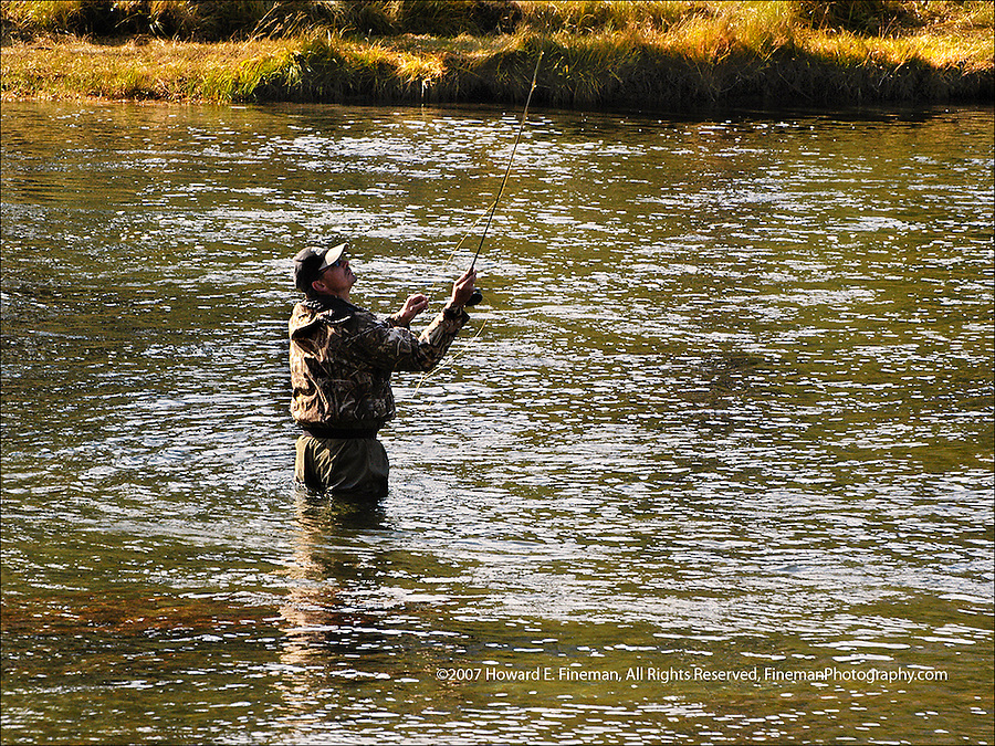 Fly Fishing in Madison River, Yellowstone National Park, Wyoming
