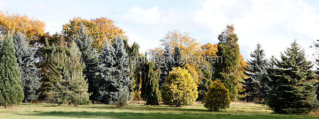Arboretum de ChËvreloup, 195 hectares, major arboretum located north of the Palace of Versailles, Rocquencourt, Yvelines, France, pictured on October 30, 2010, in the afternoon. The site forms part of the MusÈum National d'Histoire Naturelle and dates back to 1699. It contains about 15'000 specimens. Its tropical plant collection maintains about 5'000 species in greenhouses. The arboretum is organized in 3 major sections : systematic botany, the oldest plantations covering some 50 hectares ; geography, divided in 3 areas  (Europe, Asia and America, covering some 120 hectares and ornamental horticulture covering some 25 hectares. Picture by Manuel Cohen